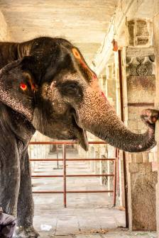 Lakshmi - The Elephant