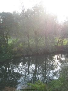 Blossom park Munnar
