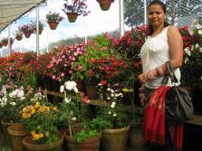 KFDC Floriculture Centre Munnar