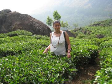 Tea garden in Munnar