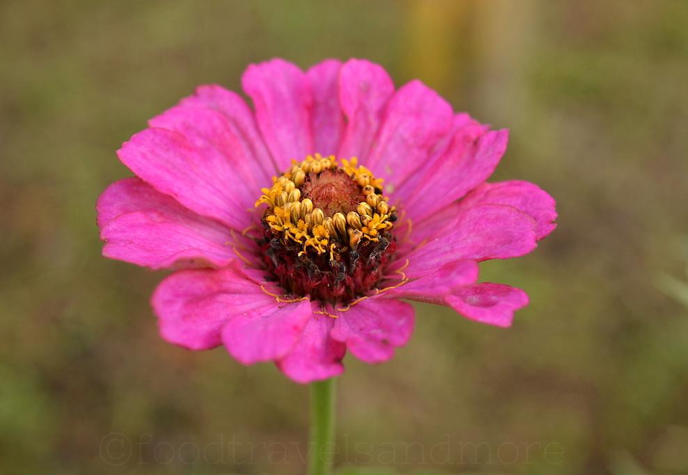 Flower near bhor