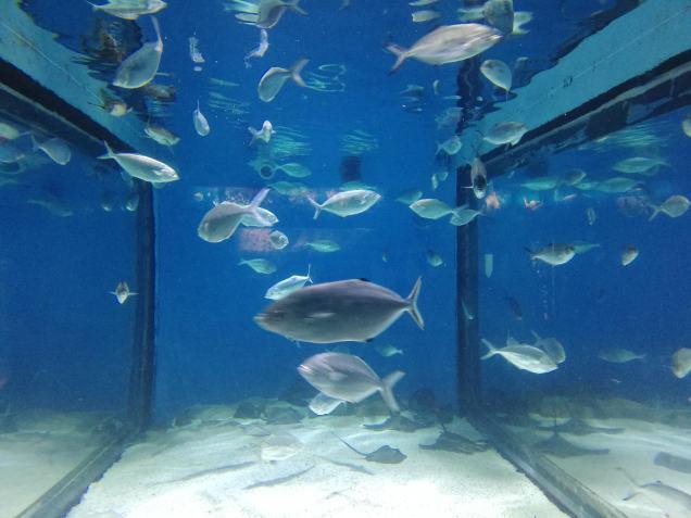 Fishes in Barcelona Aquarium