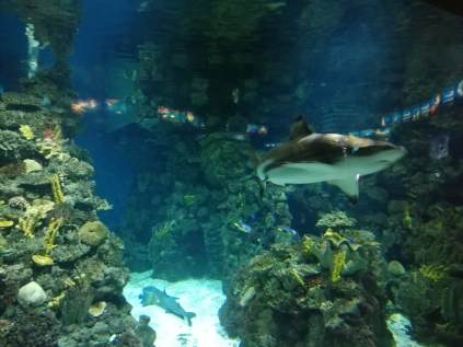 Shark in the Aquarium