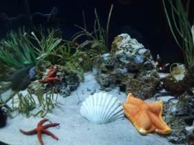 Shells in Barcelona Aquarium