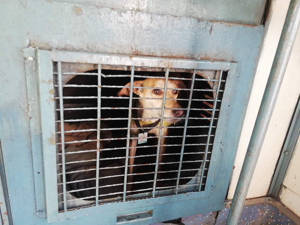 Taking dog in Indian train