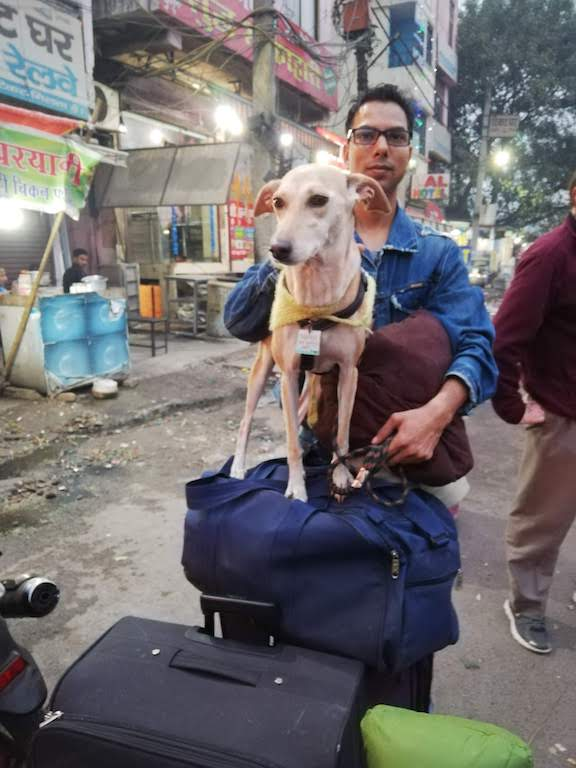 Indian railways journey with a dog
