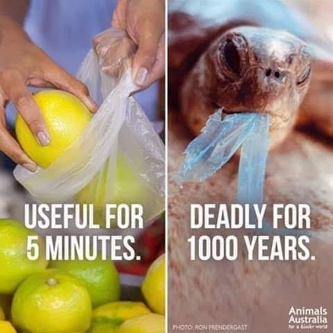 single use plastic disadvantages