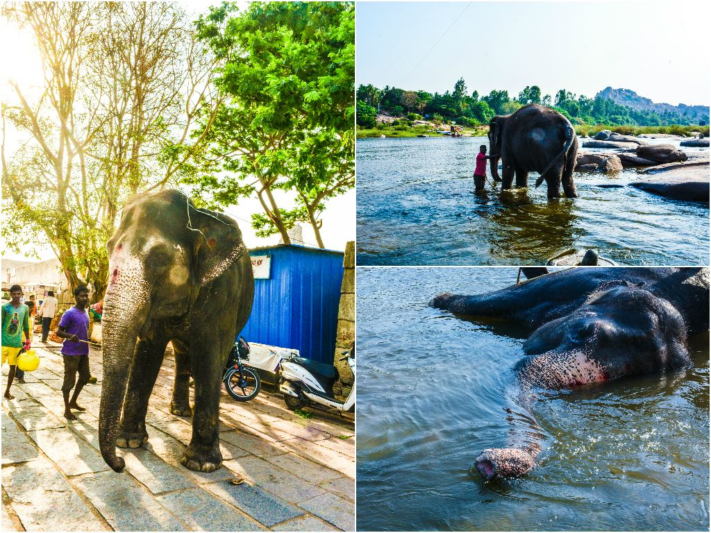 Laxmi Elephant of Virupaksha Temple, Hampi